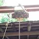 Crane Hoist Overhead