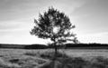 Black and white photo of landscape with shining sun through lonely tree - PhotoDune Item for Sale
