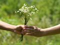 Hands of young man and girl close-up with bouquet of field daisies - PhotoDune Item for Sale