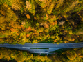 Asphalt road trough forest in fall, top down aerial from above - PhotoDune Item for Sale