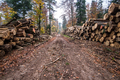 Deforestation in rural areas. Timber harvesting in forest - PhotoDune Item for Sale