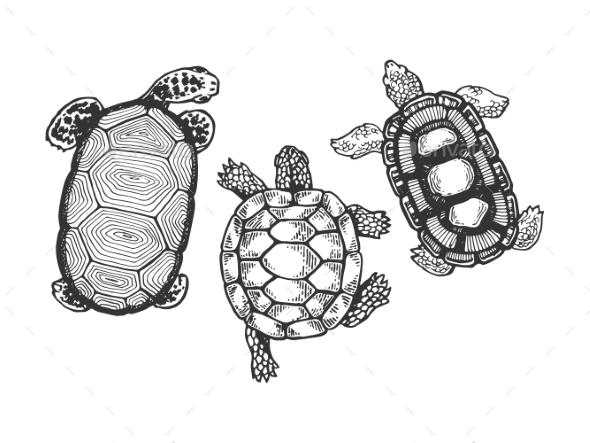 Turtle Animal Engraving Vector Illustration - Miscellaneous Vectors