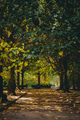 Autumn path in a city park. - PhotoDune Item for Sale