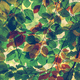 Branches of colorful autumn leaves - PhotoDune Item for Sale