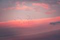 Beautiful pink sunset - PhotoDune Item for Sale