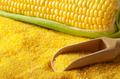 Ripe fresh organic sweet corncob with scoop closeup on grits bac - PhotoDune Item for Sale