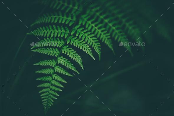 Fresh fern macro image. Horizontal orientation. - Stock Photo - Images