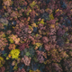 Top view of forest in autumn. - PhotoDune Item for Sale