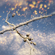 Frozen twig colorful snowfall, winter season concept - PhotoDune Item for Sale