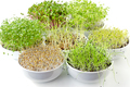 Different sprouts in white bowls - PhotoDune Item for Sale