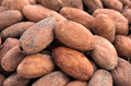 group of cocoa beans - PhotoDune Item for Sale