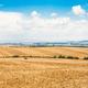 Farmland countryside panorama at morning - PhotoDune Item for Sale