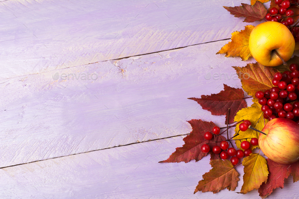 Thanksgiving greeting with viburnum, red leaves, copy space - Stock Photo - Images