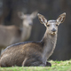 Female roe deer lies in a forest - PhotoDune Item for Sale