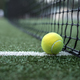 Free Download Yellow tennis ball at the net Nulled