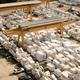 Free Download Deposit of marble blocks Nulled