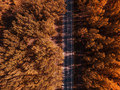 Aerial photography of empty road through autumn forest - PhotoDune Item for Sale