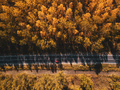 Driving through autumn forest - PhotoDune Item for Sale