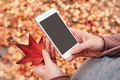 Woman holding smartphone and dry japanese maple leaf - PhotoDune Item for Sale