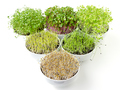 Triangle of microgreens and sprouts in white bowls - PhotoDune Item for Sale