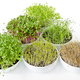 Microgreens and sprouts triangle in white bowls - PhotoDune Item for Sale