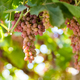Free Download ripe grapes on vineyard in autumn Nulled