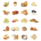 Nut Types Food Icons Set, Cartoon Style - GraphicRiver Item for Sale