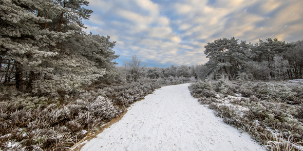 Winter forest landscape panorama Assen Drenthe - Stock Photo - Images