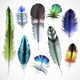 Feathers Realistic Set - GraphicRiver Item for Sale
