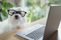 Dog using laptop computer - PhotoDune Item for Sale