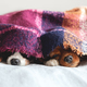 Two dogs under the blanket - PhotoDune Item for Sale