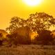 Orange morning light on S100 Kruger - PhotoDune Item for Sale