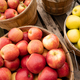 Apples Fresh Picked in a Bushel BASKET fresh food produce - PhotoDune Item for Sale