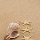 Free Download Sea shell Nulled