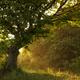 Sun shining in rain drops alt sunset in nature - PhotoDune Item for Sale
