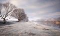 Frozen meadow in winter on lake shore - PhotoDune Item for Sale