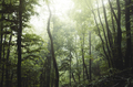 Green natural forest environment with mist - PhotoDune Item for Sale