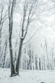 Frozen tree in cold winter forest - PhotoDune Item for Sale