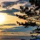 Silhouette the Kesiya tree at sunrise - PhotoDune Item for Sale