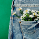 Bouquet of white flower in the pocket of a jeans - PhotoDune Item for Sale