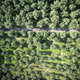 Free Download Aerial view of an olive grove Nulled