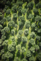 Aerial view of an olive grove - PhotoDune Item for Sale