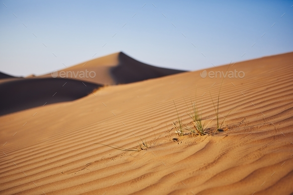 Grass on sand dune - Stock Photo - Images