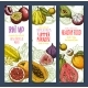 Vector Banners of Exotic Fresh Tropical Fruits Mix - GraphicRiver Item for Sale