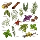 Vector Spices and Herbs Sketch Icons of Seasonings - GraphicRiver Item for Sale