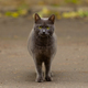 Russian blue cat on a walk in the city - PhotoDune Item for Sale