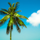 palm tree - PhotoDune Item for Sale