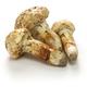 matsutake mushroom - PhotoDune Item for Sale