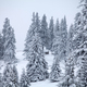 Free Download Snowy fir trees Nulled