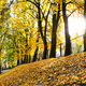 Free Download beautiful autumn Nulled